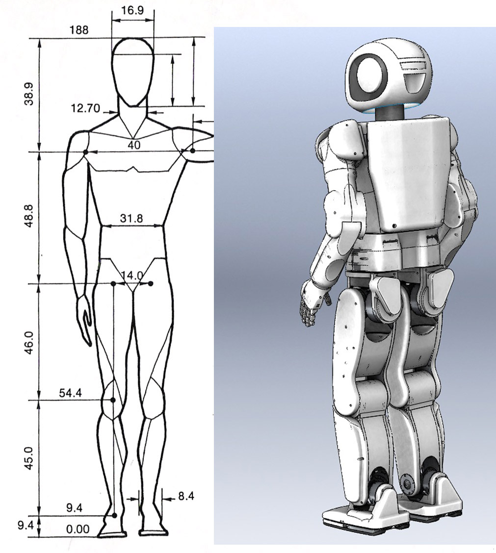 Human_proportions_by_BenTs_sTock_.jpg